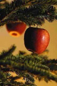 Ornamente Craciun Cu Foto